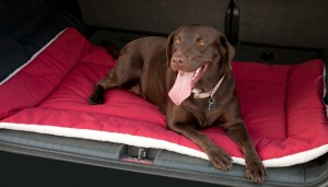 DownTime Reversible Pet Bed 2