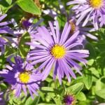 10 Hardy, Fall-Blooming Plants for Your Garden — Kate Wilson